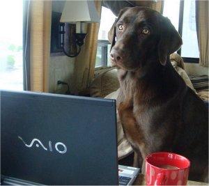 Jasper Blogs
