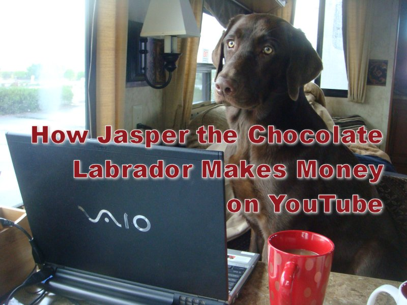 Jasper the Chocolate Labrador Knows How to Make Money on YouTube